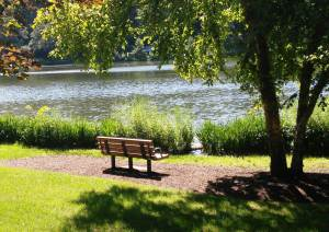 here, at my favorite bench at Lake Ellyn Park, and . . .